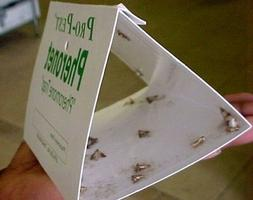 1 X Pantry Moth Traps - Set of Two